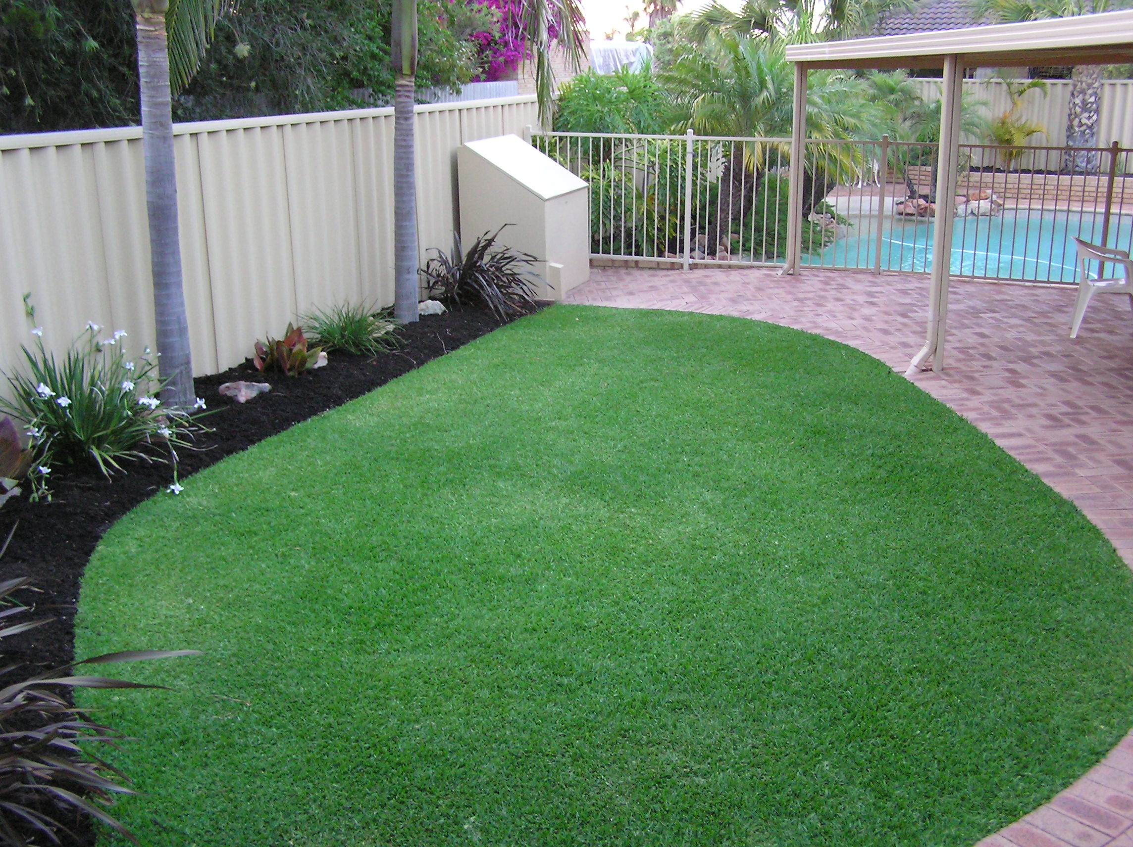 Dna Certified Sir Walter Lawn Turf Grass Lawn Doctor