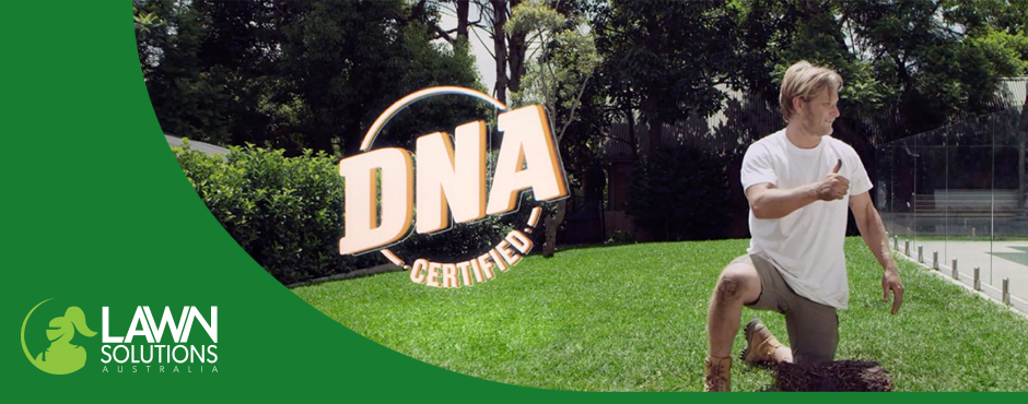 DNA certified turf